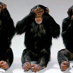 """Foto: Savanţii chinezi au creat maimuţe cu """"creier de om"""""""