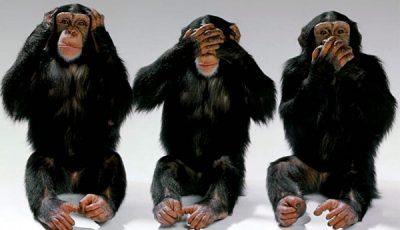 """Savanţii chinezi au creat maimuţe cu """"creier de om"""""""