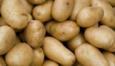 Cartofi importați din Belarus, interziși pe piață din cauza contaminării cu o bacterie periculoasă