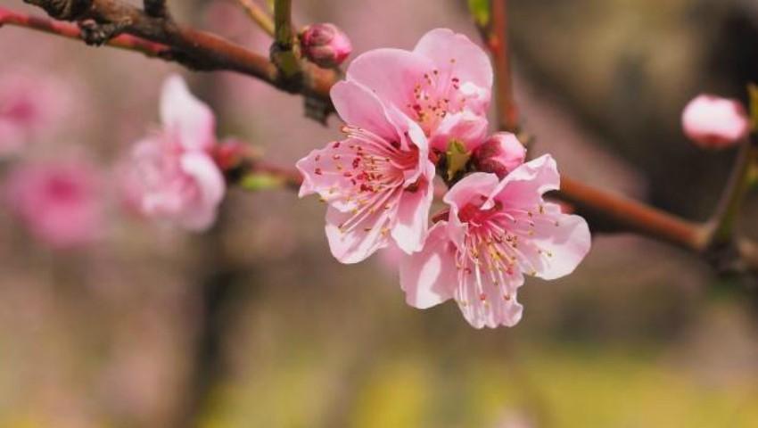 Foto: Cum va fi vremea de Florii, Paște și de 1 Mai