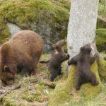Foto: Condiții de trai mai bune pentru urși, la Grădina Zoologică