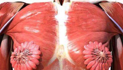 O imagine anatomică a corpului uman feminin provoacă controverse pe internet