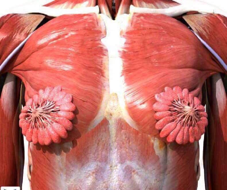 Foto: O imagine anatomică a corpului uman feminin provoacă controverse pe internet