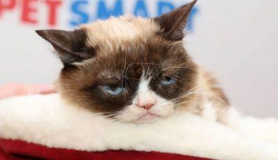A murit Grumpy Cat, pisica care lasă familiei sale o avere de cel puțin 100 de milioane de dolari