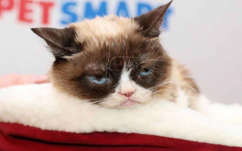 Foto: A murit Grumpy Cat, pisica care lasă familiei sale o avere de cel puțin 100 de milioane de dolari