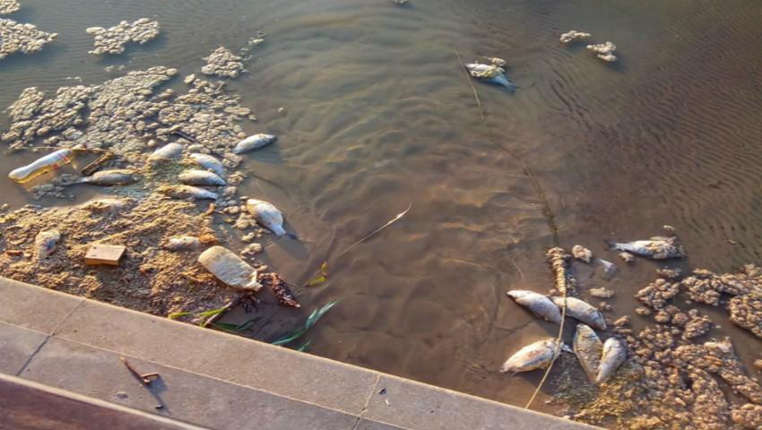 """Foto: Plastic și pește mort în lacul din parcul ,,Valea Morilor"""". Alarmant!"""