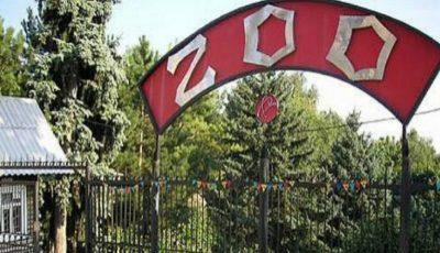 Pe 1 iunie, intrarea pentru copii, la Grădina Zoologică, va fi gratuită