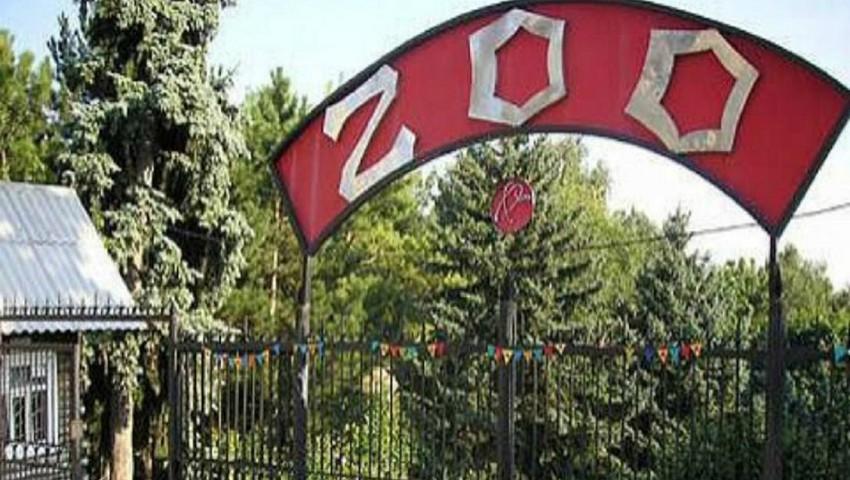 Foto: Pe 1 iunie, intrarea pentru copii, la Grădina Zoologică, va fi gratuită