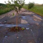 Foto: Pe o şoseauă plină de gropi localnicii au plantat pruni