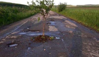Pe o şoseauă plină de gropi localnicii au plantat pruni