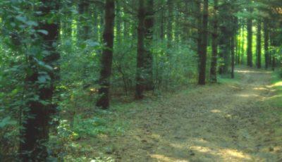 Un moldovean a dispărut într-o pădure din Rusia. Acasă, îl așteaptă soția bolnavă