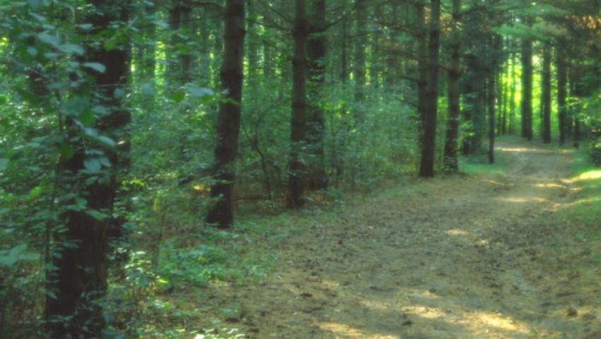 Foto: Un moldovean a dispărut într-o pădure din Rusia. Acasă, îl așteaptă soția bolnavă