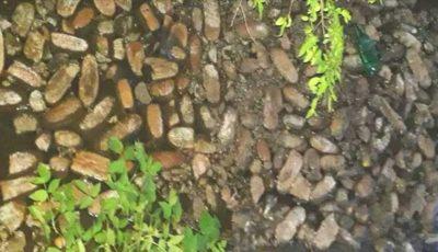 Pâine aruncată într-un râu. Imaginile care i-au revoltat pe internauți