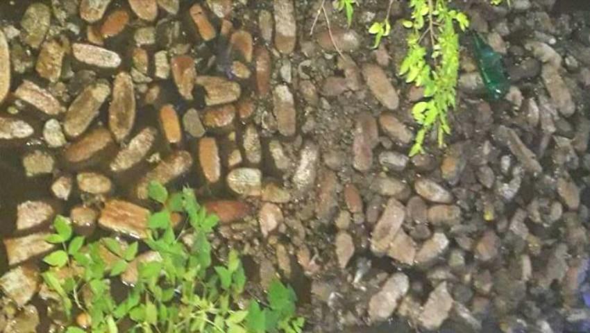 Foto: Pâine aruncată într-un râu. Imaginile care i-au revoltat pe internauți