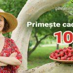 Foto: Primește 10 euro cadou accesând platforma galinatomas.com