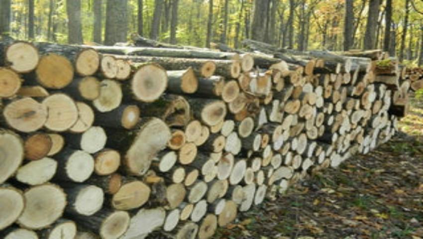 Foto: Și-au însușit sute de mii de lei, din vânzarea de lemne. Mai mulți angajați din silvicultură, reținuți de CNA