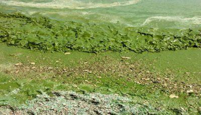 În Odessa, apa Mării Negre s-a făcut verde. Experții explică cauza: nu e bine