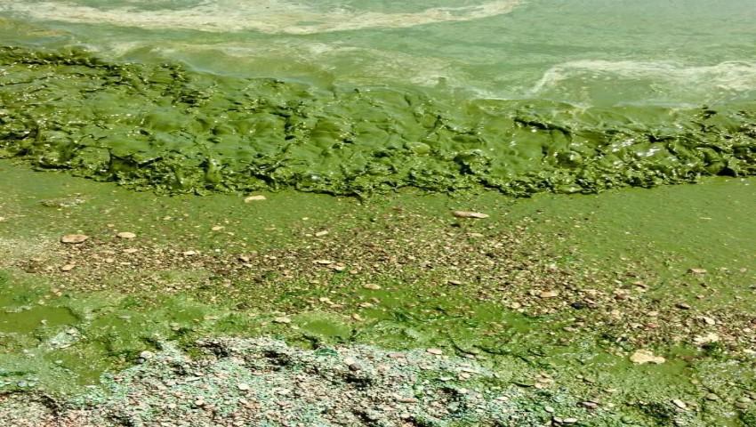 Foto: În Odessa, apa Mării Negre s-a făcut verde. Experții explică cauza: nu e bine