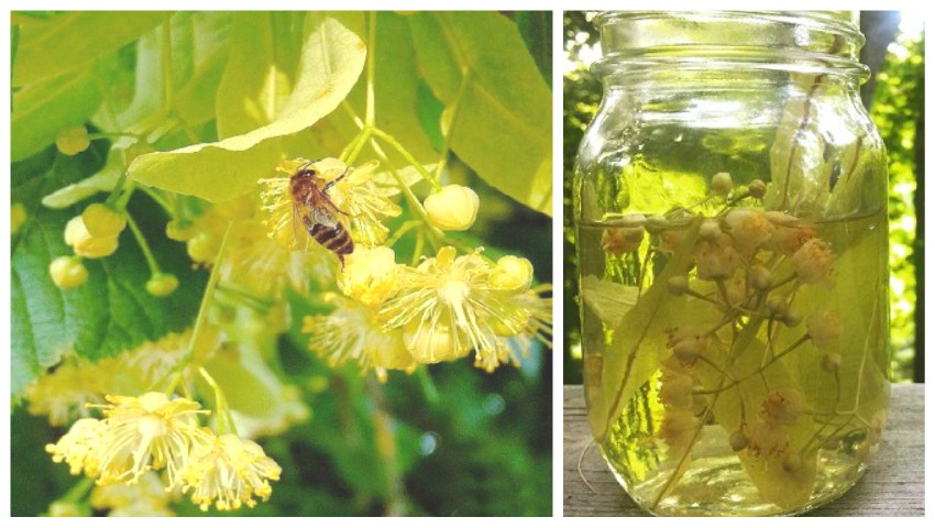 Foto: Limonadă de tei, o băutură răcoritoare parfumată