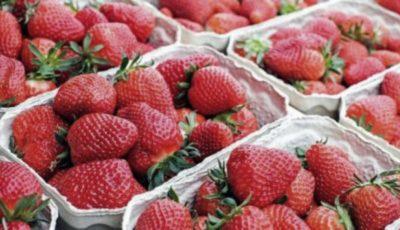 Rusia a interzis importul a 18 tone de căpșune crescute în Moldova. Erau contaminate