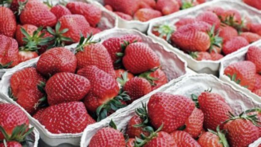 Foto: Rusia a interzis importul a 18 tone de căpșune crescute în Moldova. Erau contaminate