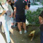 Foto: Șoc! Bărbatul din Capitală peste care a căzut un copac s-a stins din viață