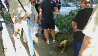 Un bărbat din capitală, rănit grav după ce un copac a căzut peste el