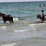 Foto: Şi-a spălat caii cu detergent şi spumă în apa Mării Negre
