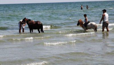 Şi-a spălat caii cu detergent şi spumă în apa Mării Negre
