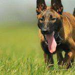 Foto: Cum să te aperi când ești atacat de câini? Sfaturile chinologului Ghenadie Rotaru
