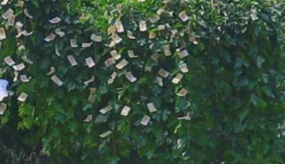 """În Moldova ,,cresc bani pe copaci"""". Video!"""