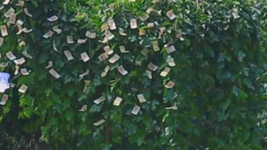 "Foto: În Moldova ,,cresc bani pe copaci"". Video!"