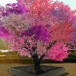 Foto: Singurul copac din lume care face 40 de soiuri de fructe: piersici, prune, migdale, caise, cireșe etc.