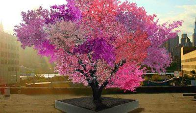 Singurul copac din lume care face 40 de soiuri de fructe: piersici, prune, migdale, caise, cireșe etc.