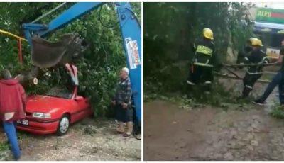Vijelia a făcut dezastru în sudul țării: copaci doborâți și case avariate. Video!