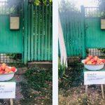 Foto: Gest de bunătate! Fructe oferite gratis, la portița unei gospodării din Porumbeni