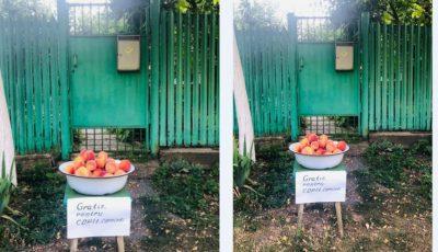 Gest de bunătate! Fructe oferite gratis, la portița unei gospodării din Porumbeni