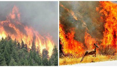 Catastrofă. Trei milioane de hectare de pădure ard în Siberia