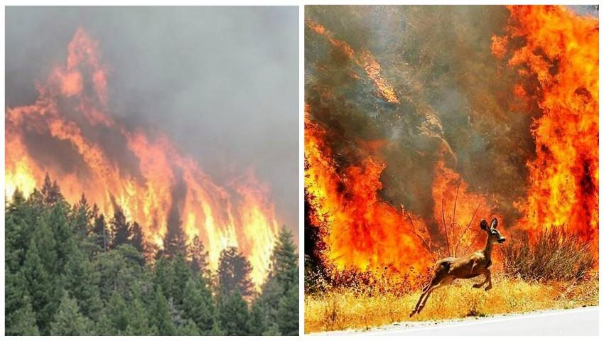 Foto: Catastrofă. Trei milioane de hectare de pădure ard în Siberia