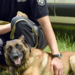 Foto: Recomandările Poliției pentru deținătorii de câini