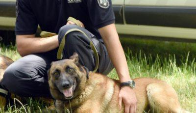 Recomandările Poliției pentru deținătorii de câini