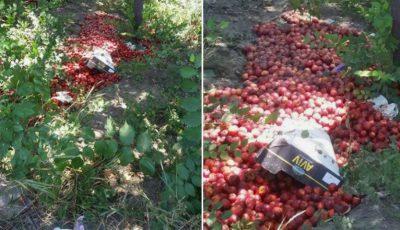 Zeci de kilograme de prune, găsite aruncate pe malul râului Bîc
