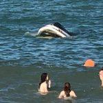 Foto: Șase persoane, la un pas de a se îneca în lacul Costești- Stânca