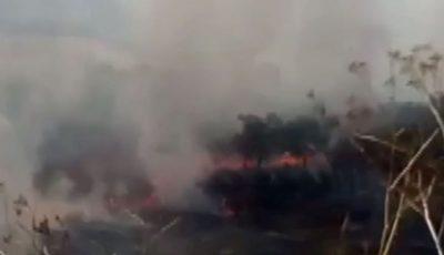 O pădure din raionul Rezina a luat foc