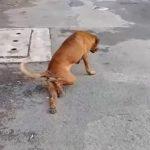 Foto: Video. Cel mai deștept câine: se preface că are piciorul rupt ca să primească mâncare