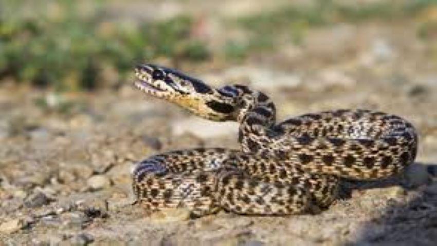 Foto: Invazie de șerpi în mai multe gospodării din sudul țării