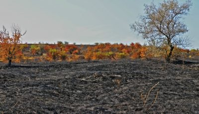 Trist. O suprafață imensă din Rezervația Orheiul-Vechi a fost mistuită de flăcări
