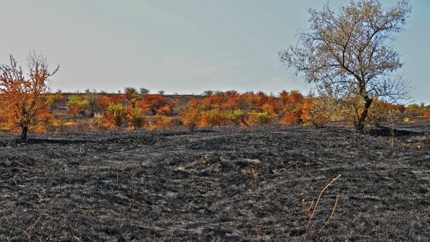 Foto: Trist. O suprafață imensă din Rezervația Orheiul-Vechi a fost mistuită de flăcări