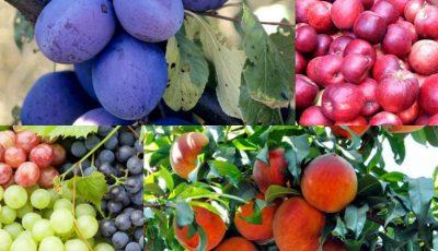 Cele mai dulci și aromate fructe cultivate în Moldova, la Târgul de roadă locală din parcul Valea Morilor!