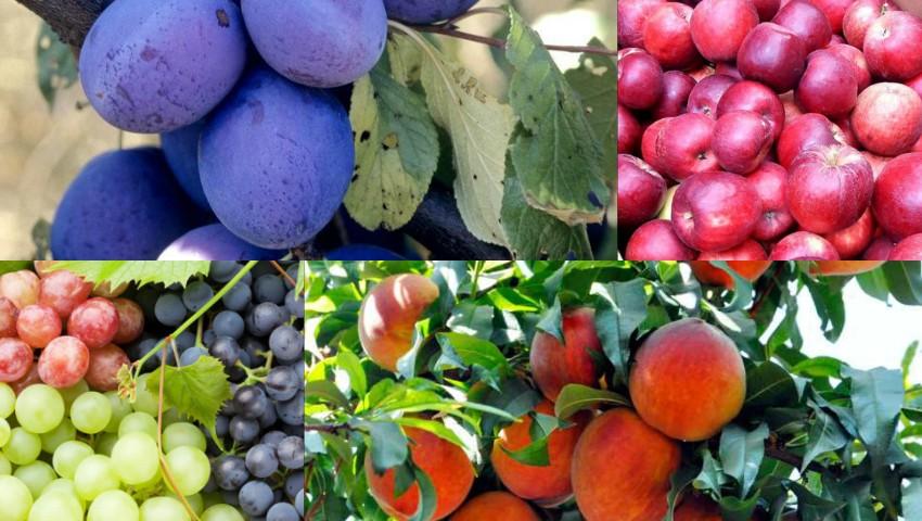 Foto: Cele mai dulci și aromate fructe cultivate în Moldova, la Târgul de roadă locală din parcul Valea Morilor!